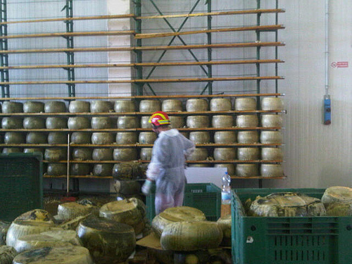 Parmigiano terremotato