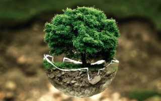 Green economy: strumenti e opportunità